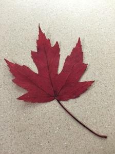 scarlet leaf