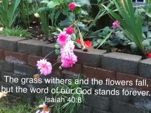 flowers , Isaiah 40:8
