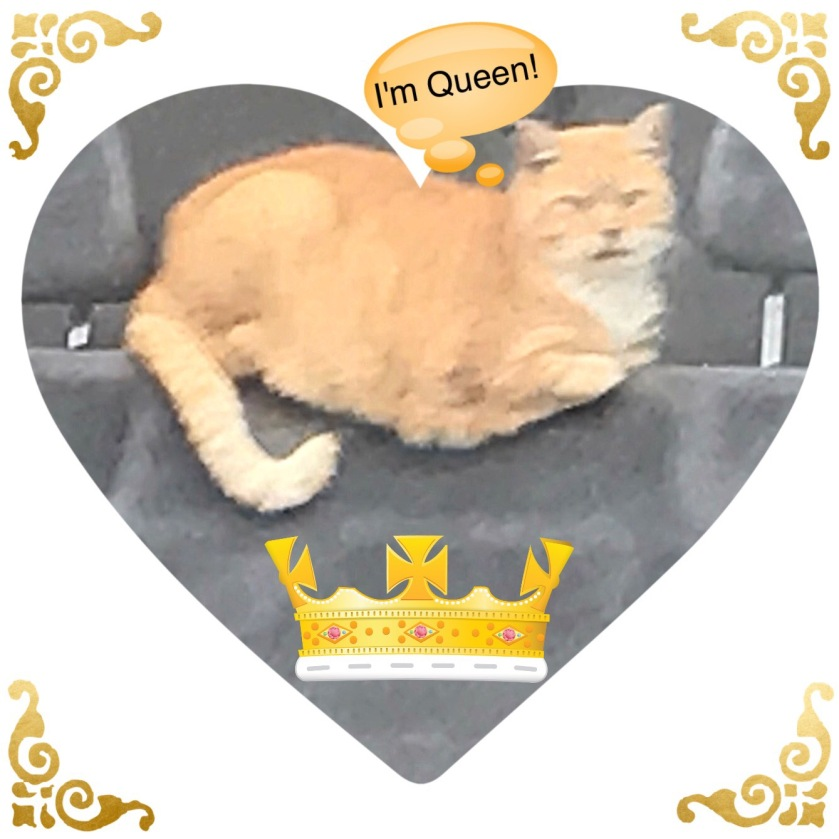 Morris the Queen, golden calico cat