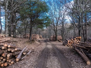 Woods, trail, logs,