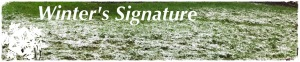 Winter's Signature, Snow on Green Grass