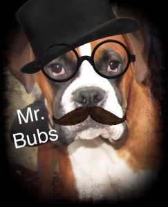 Mr.Bubs, boxer dog, pet
