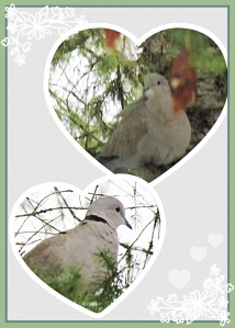 Doves in Pine Trees