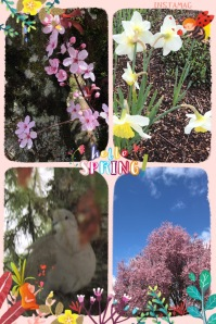 Springtime pictures