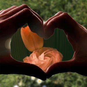 Hands, heart shape, flowers