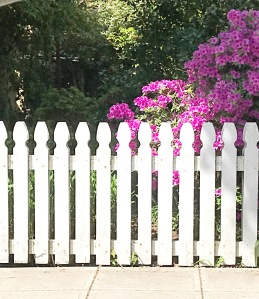 White picket fence, pretty pink flowers