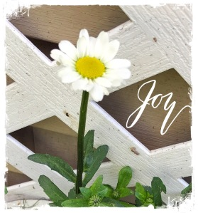 White Daisy, Joy
