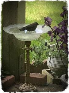 Bird in Birdbath