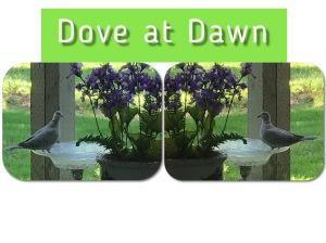 Doves, Birdbath