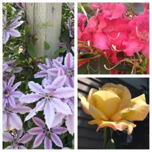 Flowers, purple clematis, red hydrangea, yellow rose