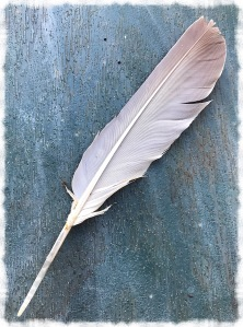 Dove Feather