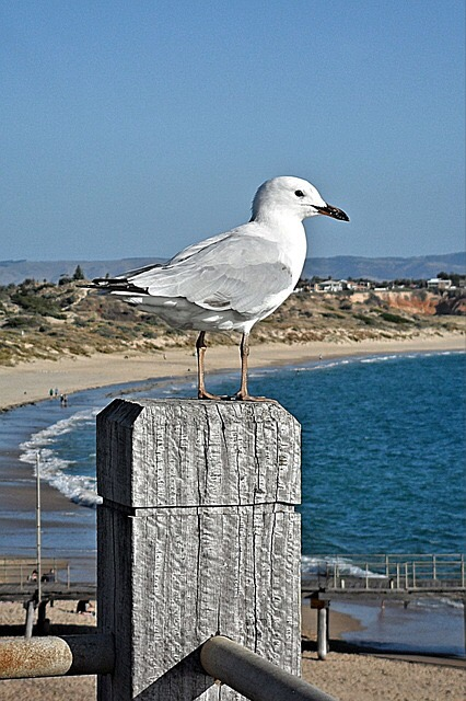 Seagull on a high post at the beach