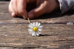 Daisy, flower, hand