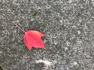 Fall leaf laying on concrete