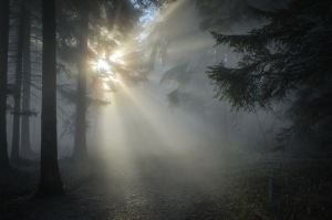 Sun shining thru trees and mist