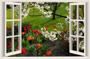 Open Window, flowers blooming