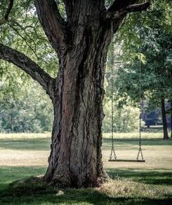 Swing in a tree