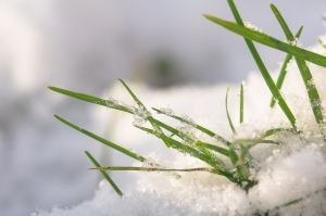 Snow covered grass