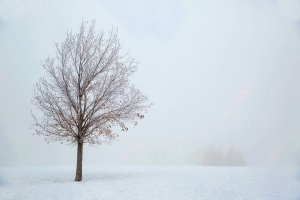 Tree standing in the haze of winter