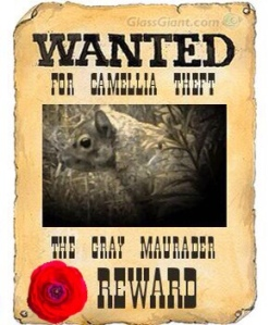 Wanted poster for Camilla thief
