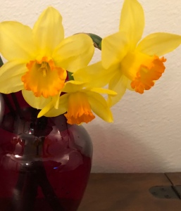 Daffodils in red vase
