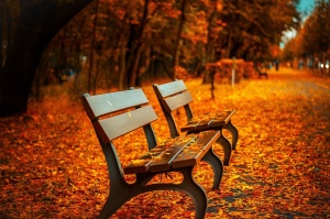 Bench near the woods and among fall Leaves