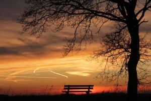 Bench in the Sunset