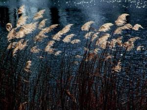 Wind, water, plants