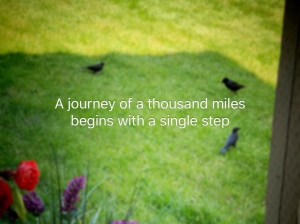 "Birds in grass, Quote "" A Journey of a thousand miles begins with a single  step"""