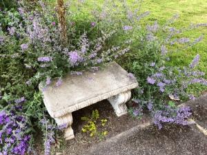 Bench, Lavender flowering