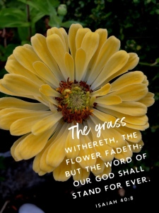 Big yellow flower, Isaiah 40:8 scripture