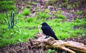 Bird, felled log