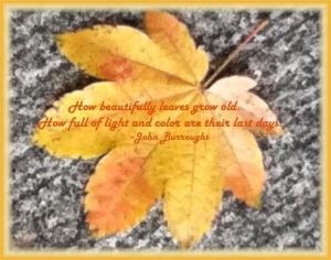 Golden Fall Leaf, John Burroughs quote