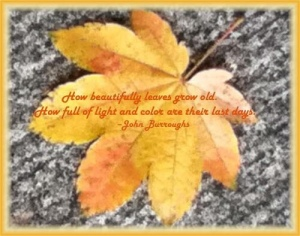 Golden Leaf, quote by John Burroughs