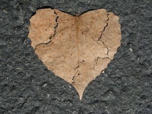 Brown leaf cracked