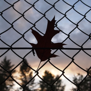 Leaf on a fence