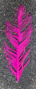 Pink Feather on sidewalk