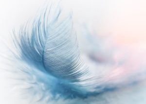 Blue feather floating