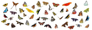 Many different kinds of butterflies flying