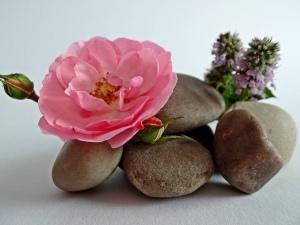 Pink Rose, rocks balanced in a pile, purple flowers