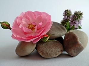 Pink Rose, rocks balanced in a pile, purple flowers