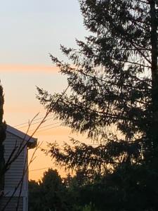 Sunset seen thru the evergreens on June 30, 2019