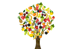Tree bearing an abundance of different fruits