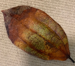 Brown dried up leaf in summer