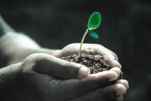 Plant, in hands, seedling