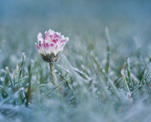 Frost on ground and on a flower