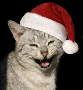 Cat wearing Santa hat and meowing