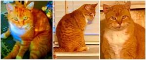 Morris the Cat—2004-2019