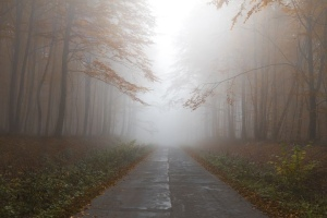 Mist, trees, forest, road