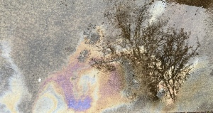 Oil slick image with tree reflection